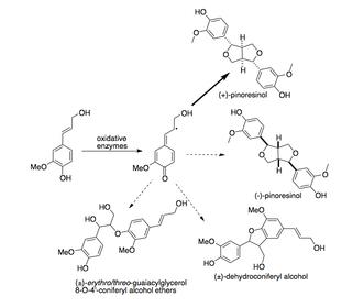 Dirigent protein - Image: Activity of Dirigent protein