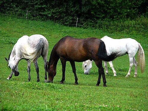 hevosen dating sites