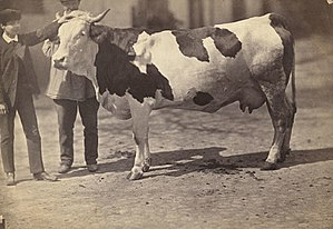 Fun:You have two cows - RationalWiki