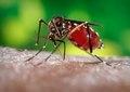 Aedes aegypti CDC04.tif