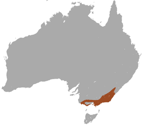 Agile Antechinus area.png