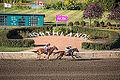 Alberta Breeders' Fall Classic 2014 - Horse Racing (15117913039).jpg