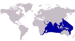 Approximate distribution of the Indian threadfish