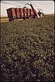 Alfalfa-field-on-experimental-farm-operated-by-epas-las-vegas-national-research-center-may-1972 6990478524 o.jpg