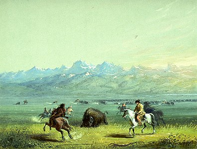 Wounded Buffalo