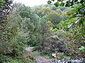 Alnetum Bistarska reka 3.JPG