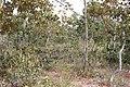 Alto Araguaia - State of Mato Grosso, Brazil - panoramio (1090).jpg
