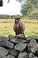 Ambury Farm (16454350359).jpg