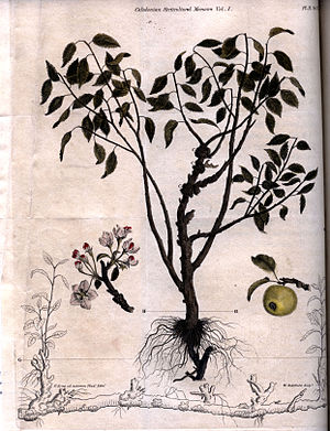 William Miller (engraver) - Image: An apple tree engraving by William Miller for William Archibald 1818