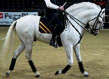 cheval espagnol syn