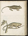 Animal drawings collected by Felix Platter, p2 - (112).jpg