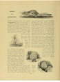 Animal life and the world of nature - Notes and Comments - Alice Foljambe - 1903-06.pdf