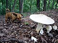 Annie Encounters a Mushroom - Flickr - Waldo Jaquith.jpg