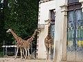 Antwerp Zoo (12210483403).jpg