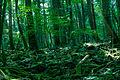 Aokigahara Forest.jpg