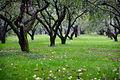 Apples in the garden (9759828474).jpg