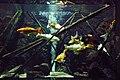 Aquariums in Artis (2130097803).jpg