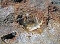Aragonite needles in vug in dolostone (Vinton Member, Logan Formation, Lower Mississippian; Route 16 roadcut northeast of Frazeysburg, Ohio, USA) 1 (38815101300).jpg