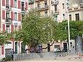 Arbres de l'amor de la plaça Joanic P1470976.JPG