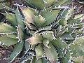 Arizona Cactus Garden 059.JPG