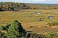 Arne RSPB reserve - geograph.org.uk - 292561.jpg