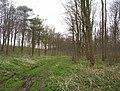 Ashslack Woods - geograph.org.uk - 11209.jpg