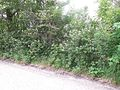 Ausenwald-bei-Mühdorf-DSCN0344-WDPA-555522076-Muehldorf-BR-48.2398-LG-12.5185.jpg