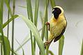 Austin Roberts Bird Sanctuary-065.jpg
