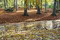 Autumn - Großer Tiergarten, Berlin, Germany - DSC09471.JPG