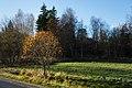 Autumn beech in Gåseberg.jpg