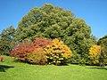 Autumn colours at Batsford - geograph.org.uk - 599945.jpg