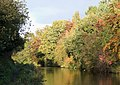 Autumn colours by the Staffordshire and Worcestershire Canal - geograph.org.uk - 1094591.jpg