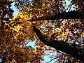 Autumn leaves... (2204505333).jpg
