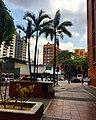 Avenida Francisco Solano Lopez Caracas Venezuela arquitectura y palmeras.jpg