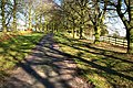 Avenue of beech trees - geograph.org.uk - 685899.jpg