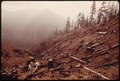 BURNED CLEAR-CUT AREA OF OLYMPIC NATIONAL TIMBERLAND WASHINGTON. NEAR OLYMPIC NATIONAL PARK - NARA - 555088.tif