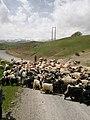 Bakhtiari nomads.jpg