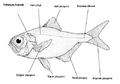 Balık.png
