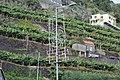 Bananenstauden und Weihnachtsdekoration in Calheta, Madeira.jpg