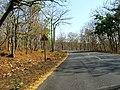 Bandipur Tiger Reserve - panoramio (22).jpg