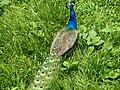 Bangabandhu Sheikh Mujib Safari Park 31.jpg