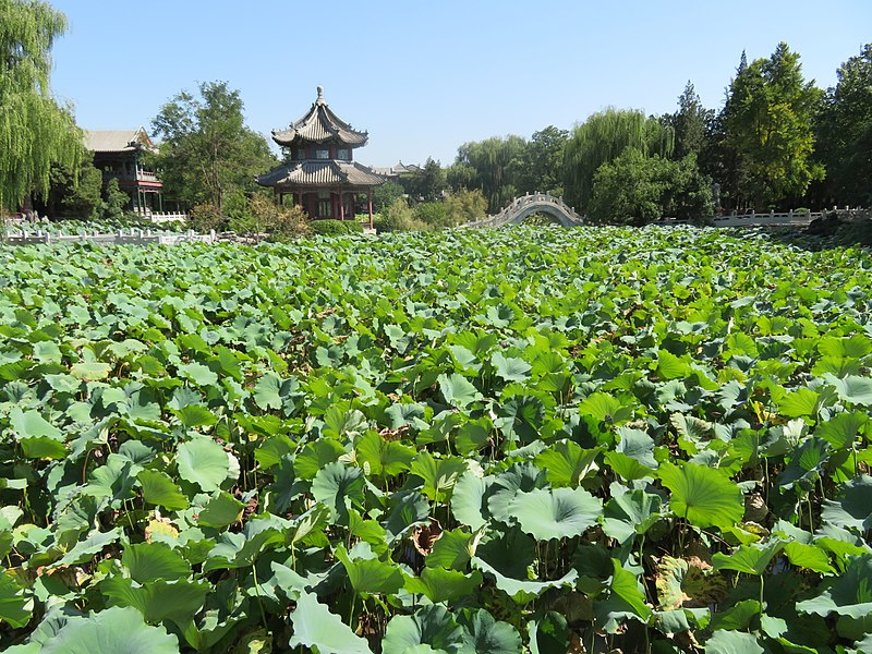 File:Baoding Ancient Lotus Pond in Autumn.jpg