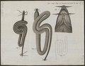 Barbus vulgaris - anatomie - 1778-1786 - Print - Iconographia Zoologica - Special Collections University of Amsterdam - UBA01 IZ15000104.tif