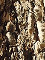 Bark on Tree.jpg