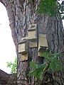 Bat boxes, Stover Country Park - geograph.org.uk - 947829.jpg