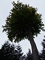 Baum - panoramio (1).jpg