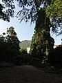 Baum Bozen.jpg