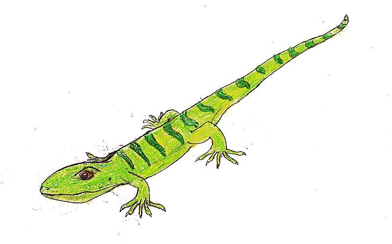 http://upload.wikimedia.org/wikipedia/commons/thumb/5/54/Bavarisaurus_EF.jpg/800px-Bavarisaurus_EF.jpg