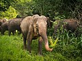 Beautiful Asian Elephant.jpg