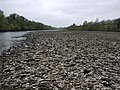 Bed of the River Tyne at low tide - geograph.org.uk - 1268204.jpg